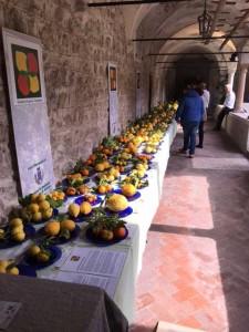 Citrus Ausstellung mit seltenen Exponaten besucht mit Candice Cooper Schuhe